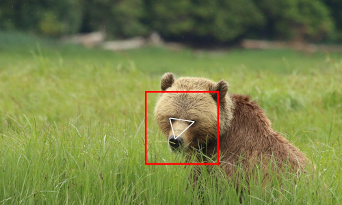 Using facial recognition on bears.